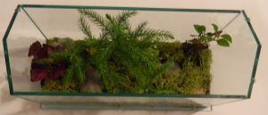 terrarium class 02