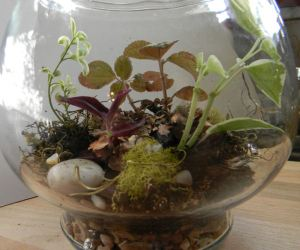 terrarium small side