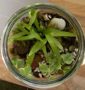 terrarium snail top view